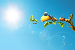 Sun Birds