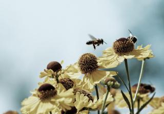 Bees Buster para Nokia X2-01