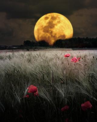 Night Poppies Field para Nokia 5230