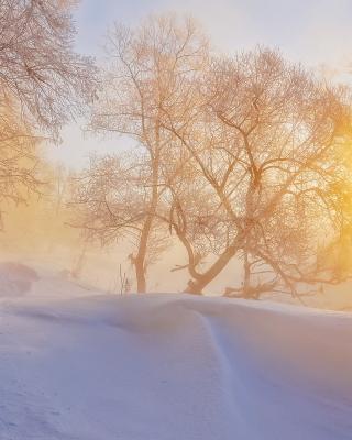 Morning in winter forest per Nokia Lumia 800
