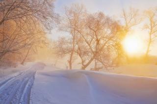 Morning in winter forest para Motorola RAZR XT910