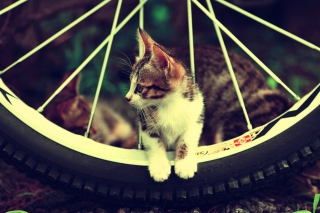 Cat And Tire