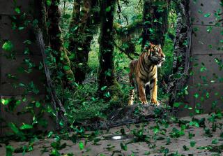Tiger Running Free para Nokia Asha 201