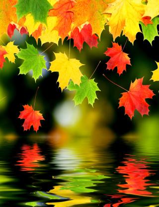 Treetops In Autumn para Nokia 5230