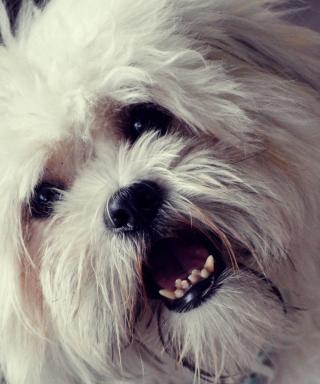 White Fluffy Doggy para LG BL40 New Chocolate