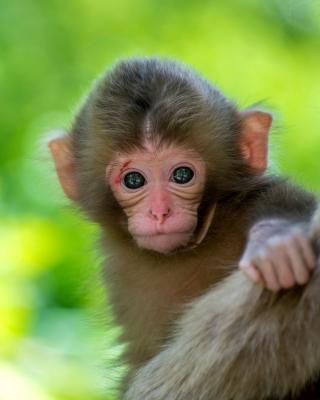 Monkey Baby para Samsung GT-S5230 Star