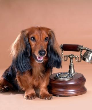 Dog With Phone para LG BL40 New Chocolate