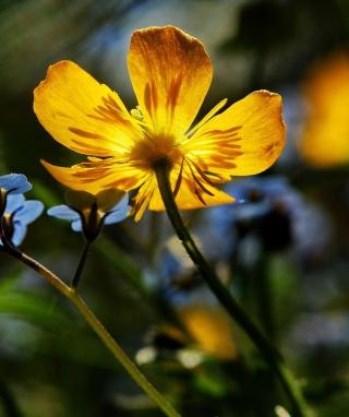 Yellow Flower Close Up para LG BL40 New Chocolate