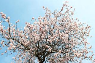 Spring Blossom para Motorola RAZR XT910
