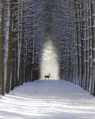 Spruce Winter Alley para Nokia 5230