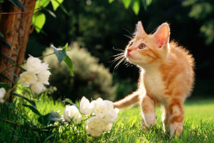 Sweet Cat screenshot #1