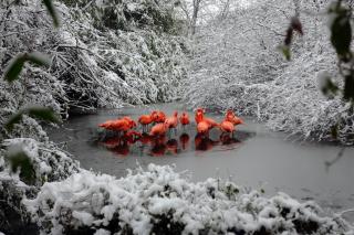 Flamingo on Lake
