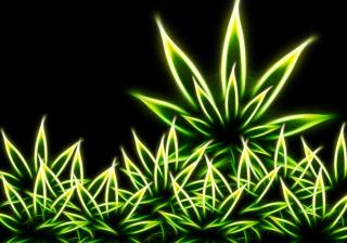 Marijuana para Samsung S5367 Galaxy Y TV
