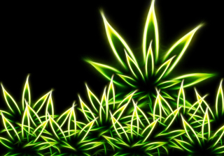 Marijuana para Motorola RAZR XT910