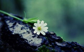 Flower On Log