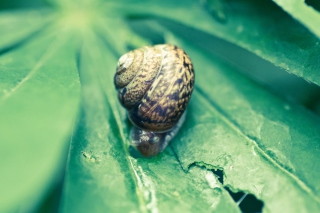 Snail On Plant