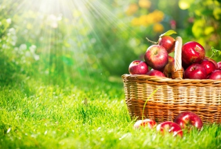 Red Apples In Basket para Sony Ericsson XPERIA PLAY