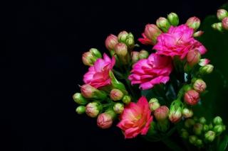 Masterpiece Floral