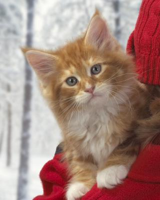 Cat Friend para Samsung S5233T