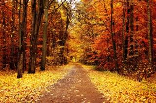 Autumn Pathway para Samsung S5367 Galaxy Y TV