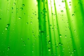 Green Drops Of Rain