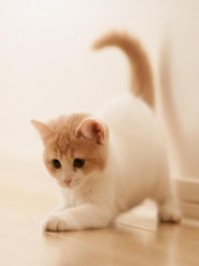 Cute Kitty for Nokia Asha 303