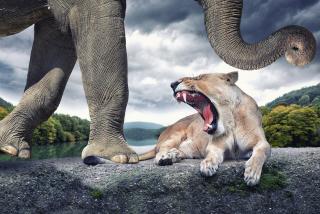 Wild Animal World