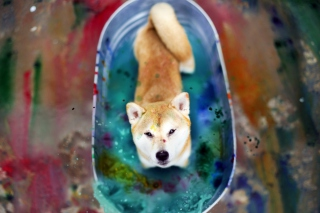 Dog And Colors
