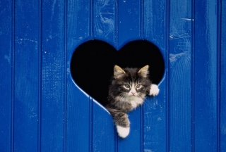 Cat In Heart-Shaped Window