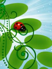 3D Ladybug para Huawei G7010