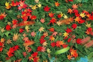 Red Leaves para Nokia X2-01