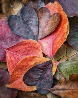 I Love Autumn para Huawei G7300