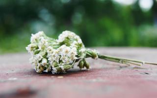 Cute Summer Bouquet