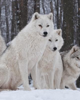 Wolf Pack Howls per Nokia Lumia 800