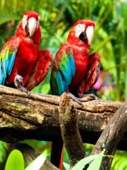 Exotic Birds for Nokia Asha 303