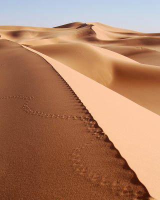 Desert Dunes In Angola And Namibia for Samsung SGH-T528G