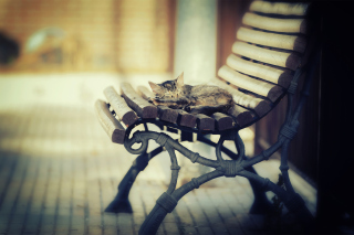Cat Sleeping On Bench