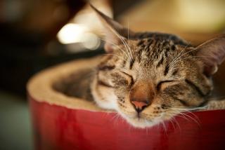 Sleepy Muzzle
