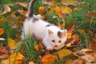 Kitty And Autumn Leaves para Sony Ericsson XPERIA PLAY